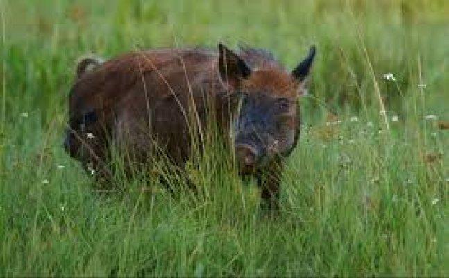 नैनीताल- गौलापार में जंगली जानवरों से परेशान लोगोंं ने वन विभाग से लगायी गुहार
