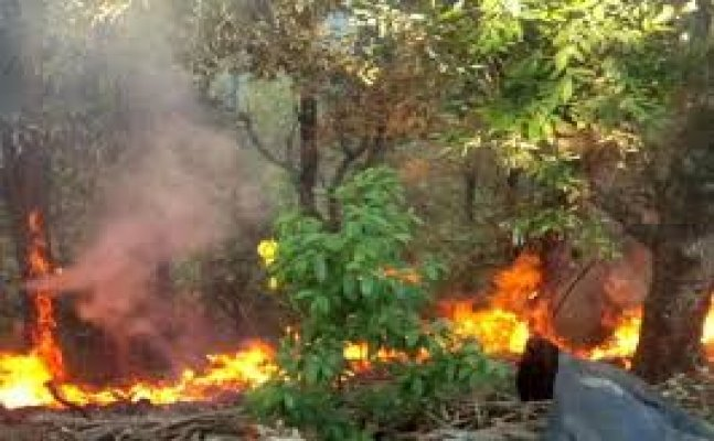 नैनीताल: आग बुझाने के दौरान वनरक्षक गायब