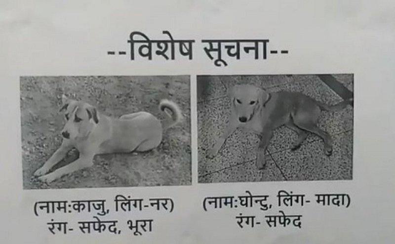 लापता कुत्तों को खोज रहे हैं IIT कानपुर के स्टूडेंट्स, किया इनाम का एलान