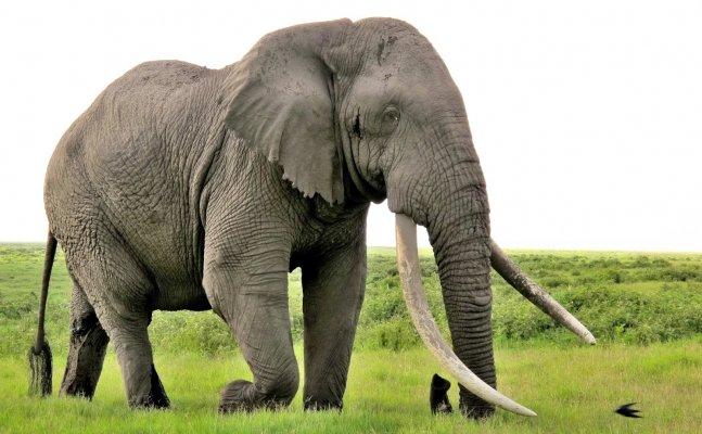 हाथी से परेशानी में लोग, अब तक 4 घायल