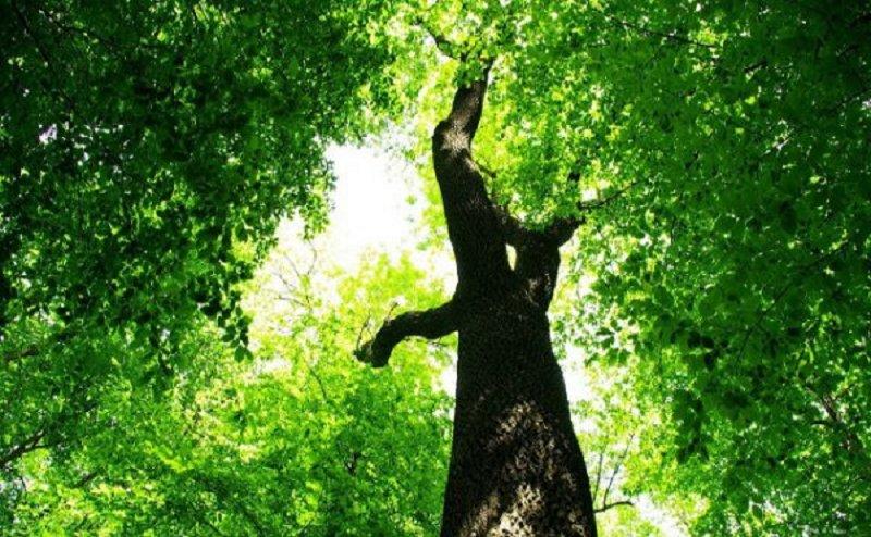 हरे पेड़ काटे जाने के खिलाफ इलाहाबाद में प्रदर्शन, हाईकोर्ट ने लिया संज्ञान