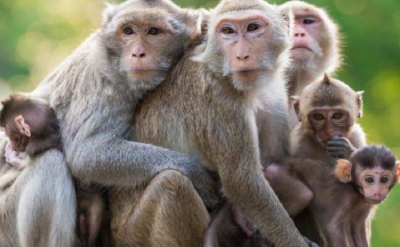 हरिद्वार में बंदरों के आतंक से लोग परेशान, जानिए क्यों बाइक चुराता था एक चोर