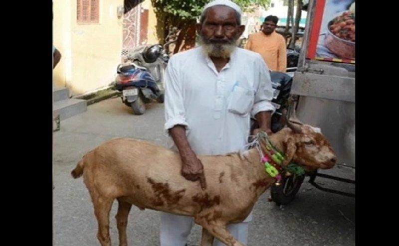 65 लाख रुपए लग गई इस बकरे की बोली, मालिक ने फिर नहीं बेचा, जानिए क्यों?