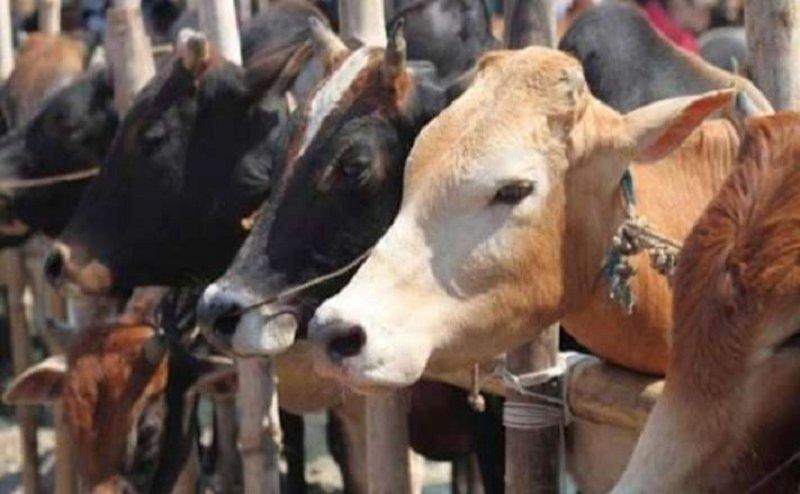 हरिद्वार में गायों के संरक्षण के लिए अब तक नहीं उठाया गया कोई कदम