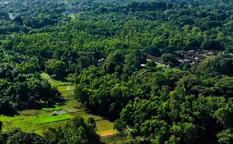 जंगल के जंगल साफ हो रहें, सरकार कह रही पेड़ तो लग रहे हैं
