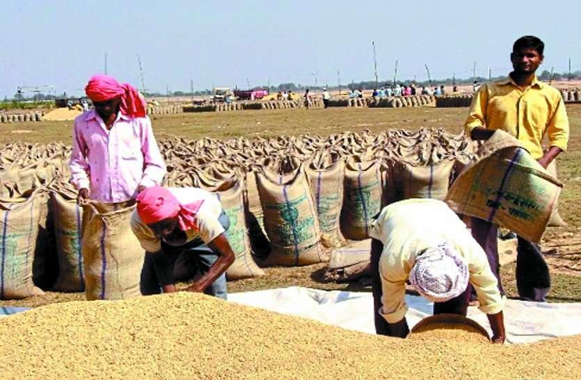 धमतरी: हमालों की नाराज़गी का खामियाज़ा भुगत रहे छोटे किसान, खुद तौल रहे हैं धान