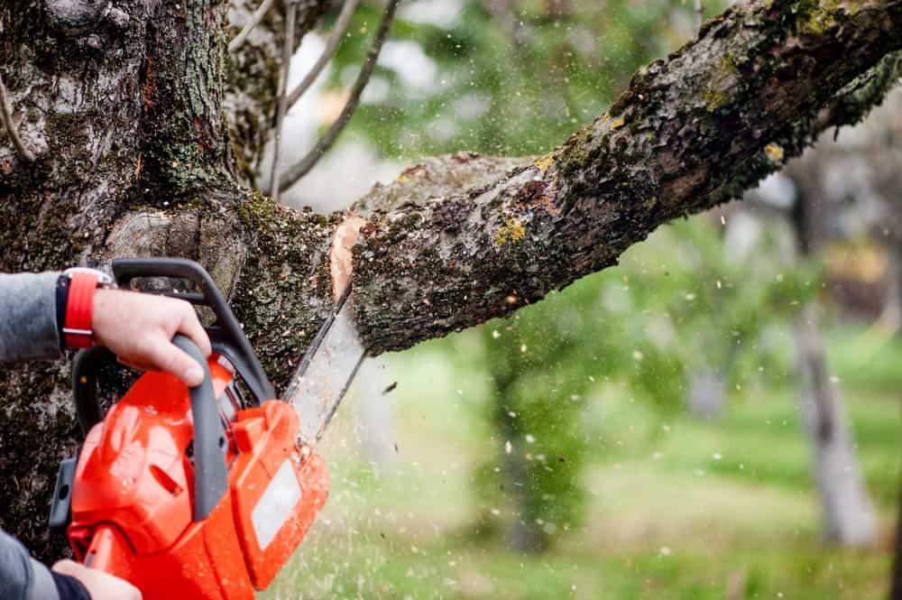 पेड़ों की कटाई रोकने गए वनरक्षक की पिटाई, वर्दी फाड़ी और सिर फोड़ा