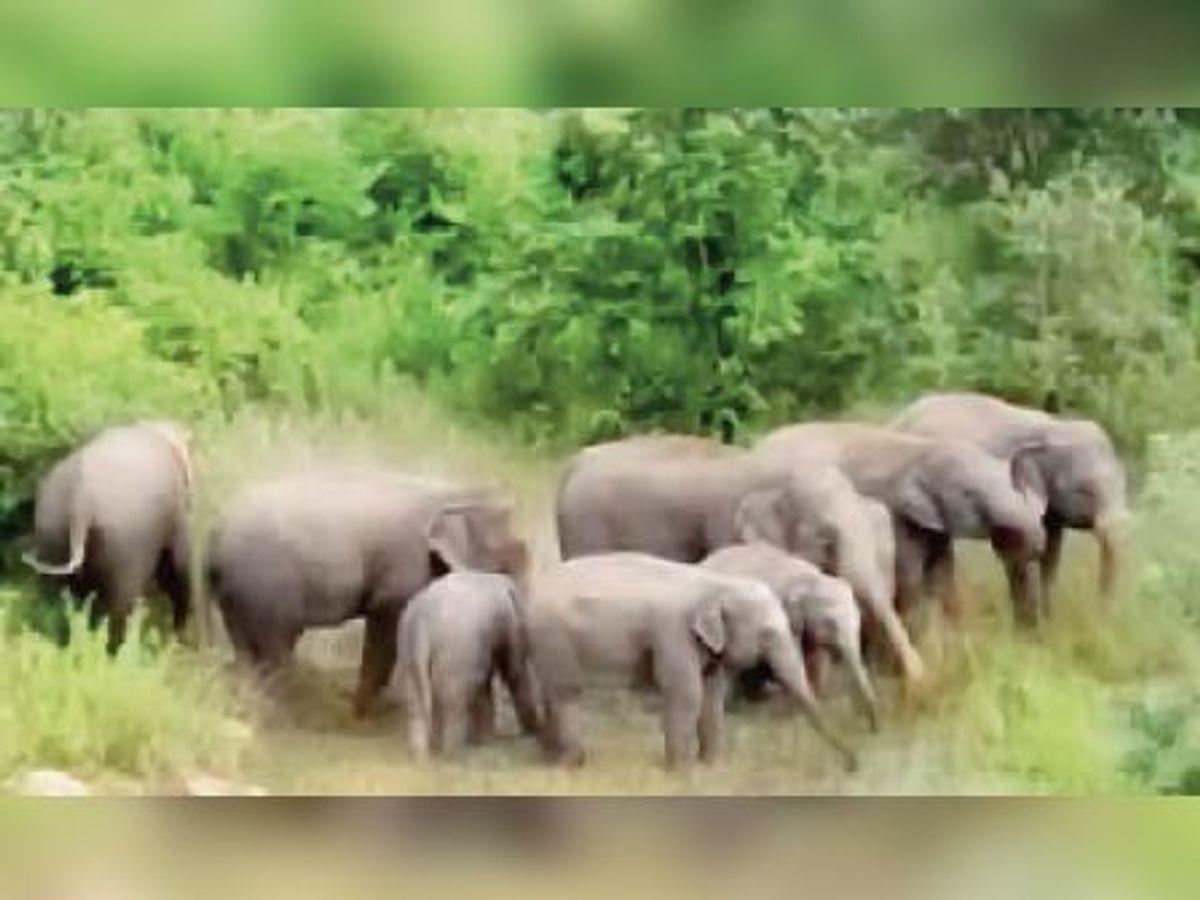 कांकेर में दिखा हाथियों का झुंड, लोगों में दहशत