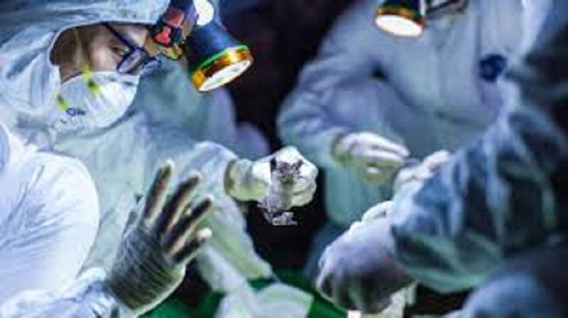 धमतरी में 5 कोरोना मरीजों समेत पूरे राज्य में 300 से ज्यादा लोग संक्रमित