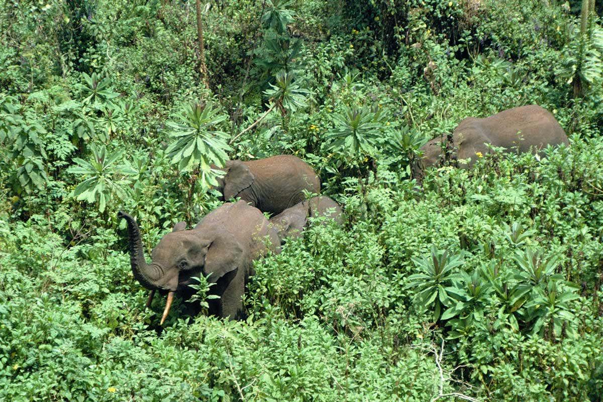 धमतरी: जिले के जंगल हाथियों को आ रहे हैं रास, जमा रखा है डेरा