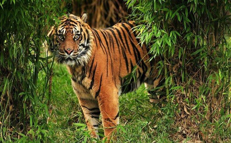 International Tiger Day: बाघ को संरक्षित करने के लिए यूपी में बनेंगे चार टाइगर रिजर्व, केंद्र ने दी मंजूरी