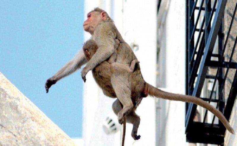 फतेहपुर: बंदरों ने फेंका सुतली बम, विस्फोट में 3 घायल