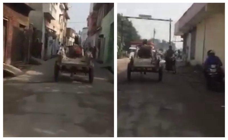 मुरादाबाद: तारों में लगी आग को देख तेज रफ्तार से दौड़ा घोड़ा, देखिए Video