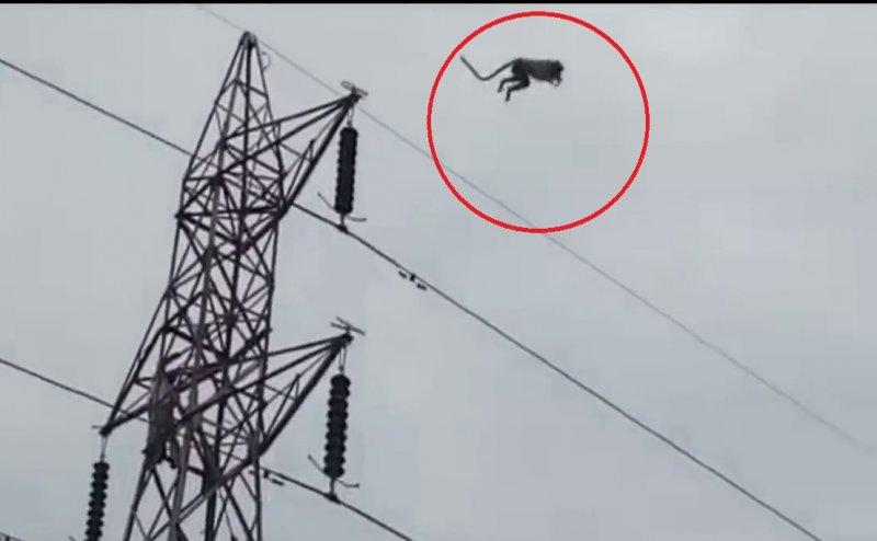 आगरा: 60 फीट ऊंचाई से लगूंर ने लगाई छलांग, देखती रह गई भीड़