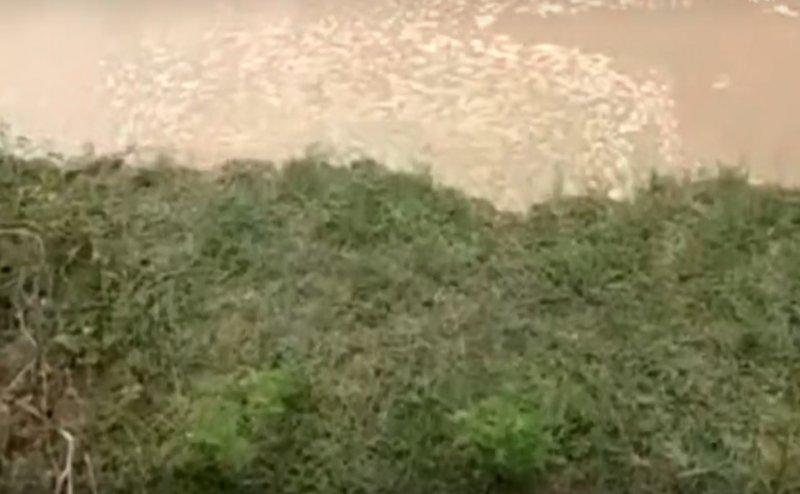 बलिया: गंगा कटान में बह रही उपजाऊ भूमि, लोगों की बढ़ी समस्या