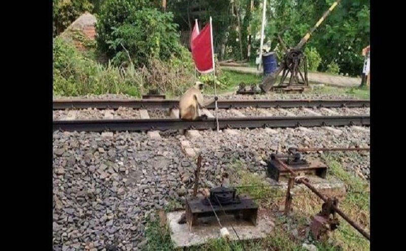 जब रेल ट्रैक पर लाल झंडी लेकर बैठ गया लंगूर, जानिए फिर क्या हुआ?