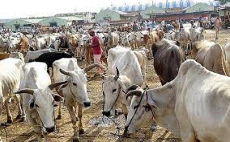 सेना से 10 हजार गाय लेगी त्रिवेंद्र की सरकार, इस योजना की होगी शुरूआत
