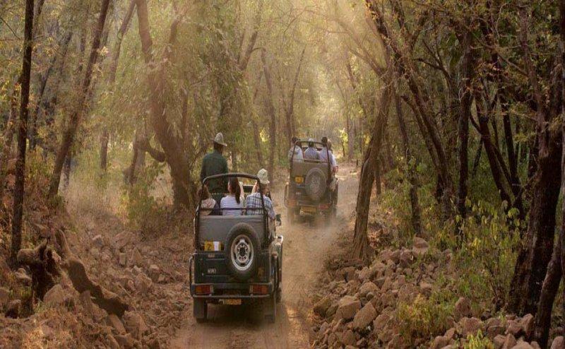 Jim Corbett National Park: ऑनलाइन बुकिंग कराते ही टूरिस्टों को मिलेगा जिप्सी और ड्राइवर