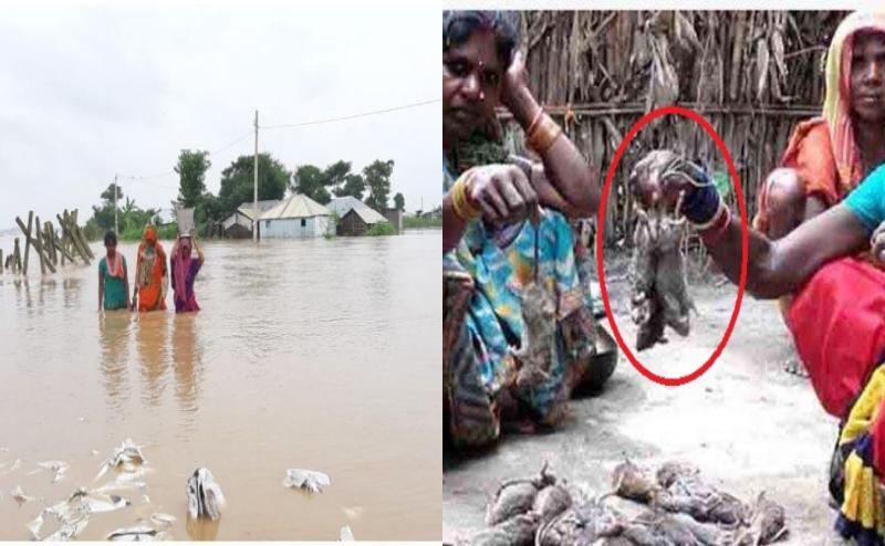 शर्मनाक: बिहार में बाढ़ पीड़ित चूहा खाने को मजबूर, नहीं मिल रहा सरकारी अनाज
