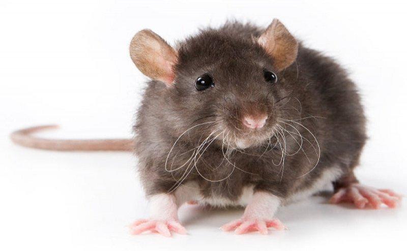 बैंक के अंदर चूहे ने बजाया आधी रात एटीएम का सायरन, पुलिस ने की घेराबंदी