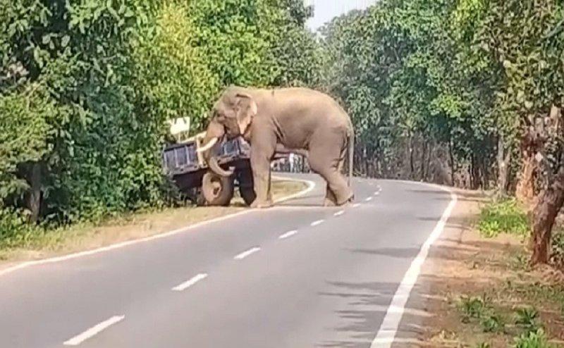 धान बेचने जा रहा था, हाथी ने रोका टैक्टर तो भागकर मंदिर में बचाई जान