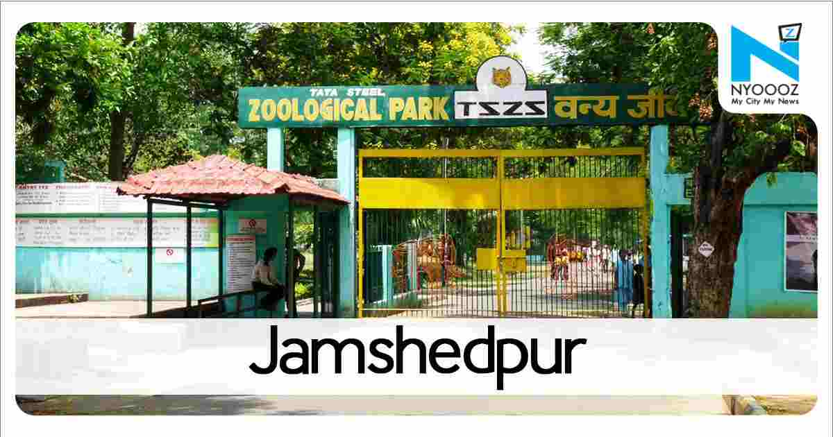 Another tiger dies at Tata zoo