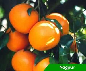 President's visit: Traffic jam blocks Nagpur's arteries