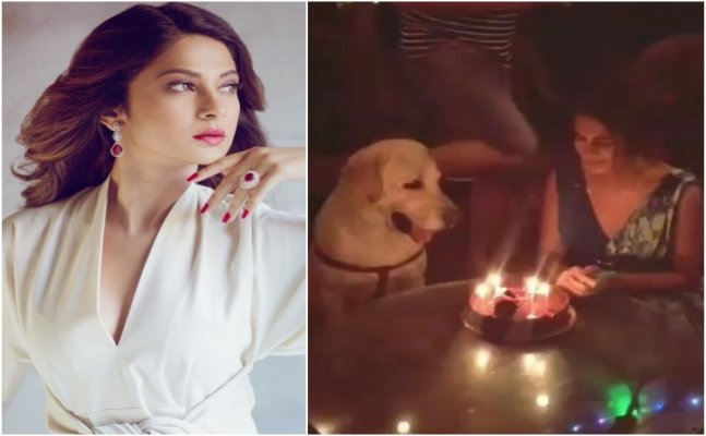 Lol! Look who had the first bite of Jennifer Winget's bday cake