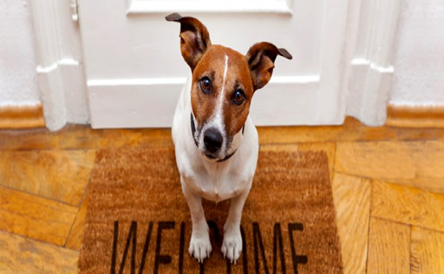5 Ways to make your new pet feel at home