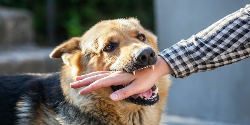 What Should You Know If a Dog Bites You?