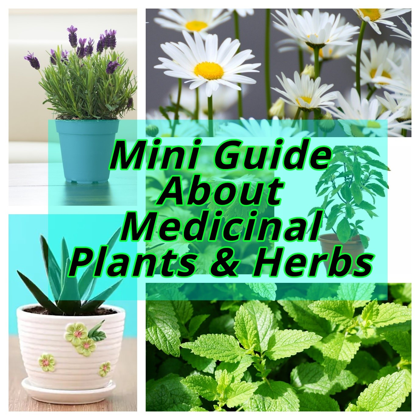 Mini Guide About Medicinal Plants & Herbs