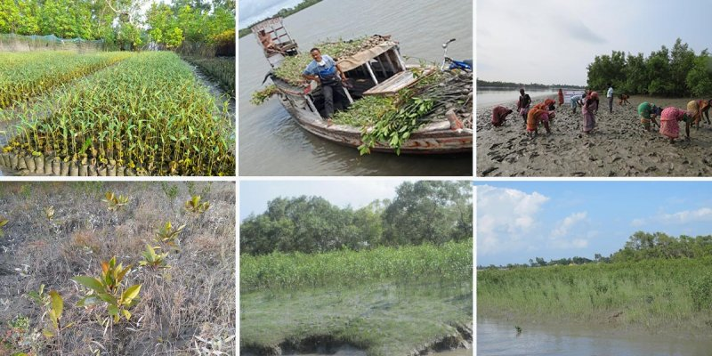 World Environment Day: Awareness and action are needed to restore the ecosystem