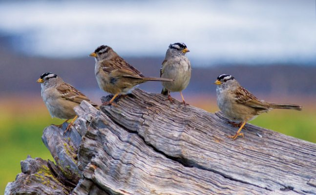 World Sparrow Day: This is how you can save these flying creatures