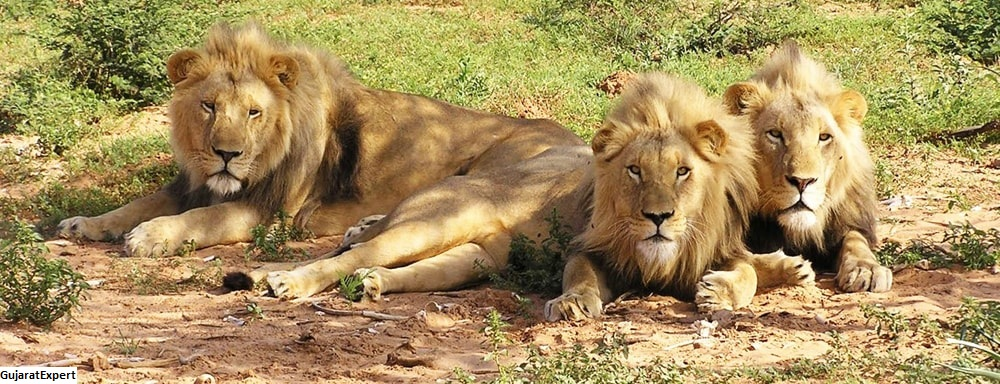 7 things you cannot miss at GIR FOREST!
