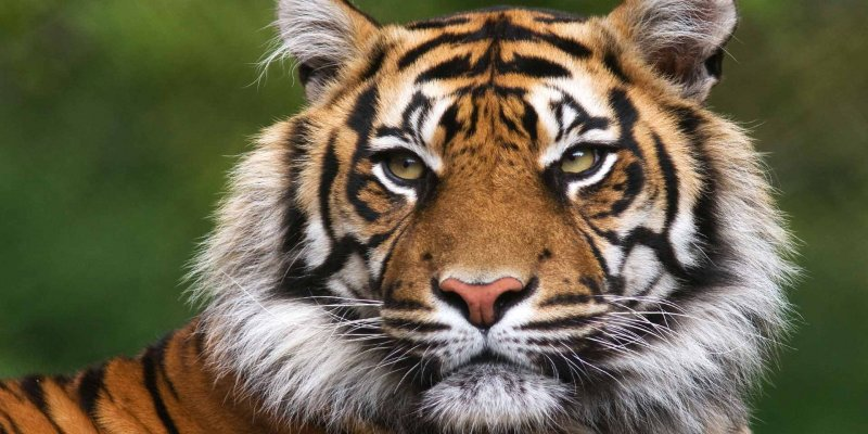 The places to visit to spot tigers in India