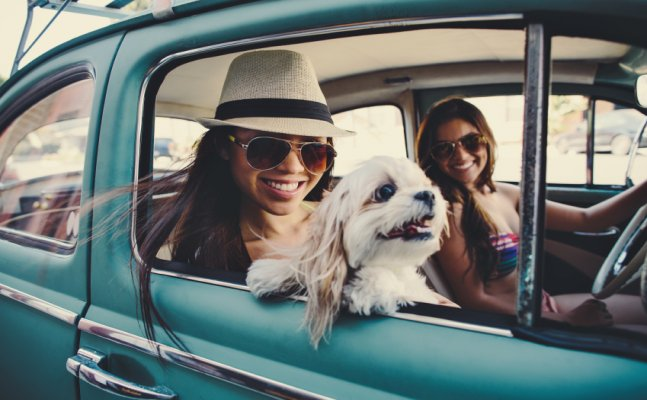 Your pets can accompany you while you travel, here's how