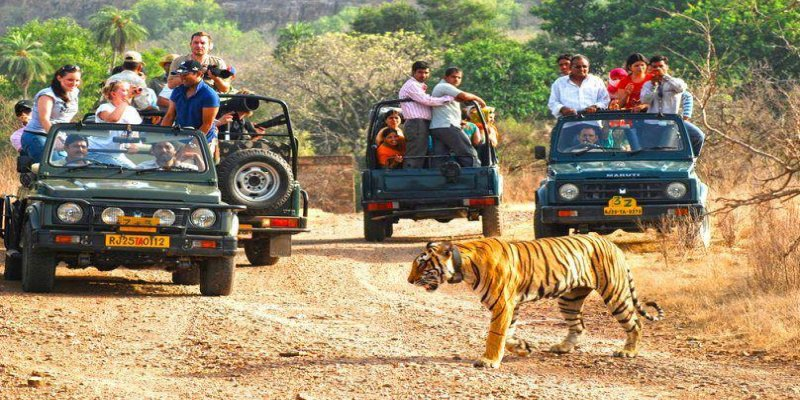 "Explore Corbett amidst ""Luxury and Adventure"""