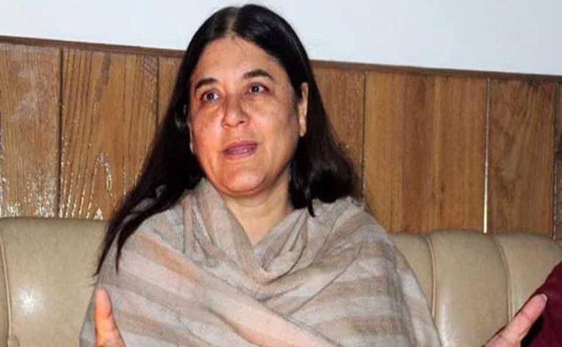 Maneka Gandhi NGO Files Complaint Against Horse Painted With BJP Symbol