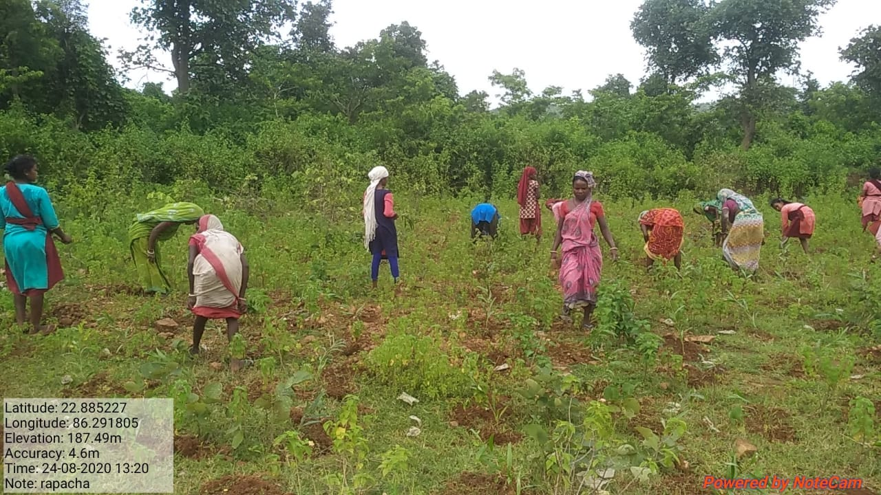 Large-scale tree plantation can prevent forest fires like the one raging in Odisha`s Similipal Tiger Reserve