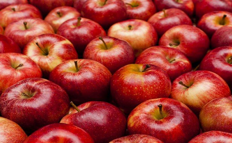 Apple experiment in Vadodara huge Success for Farmer