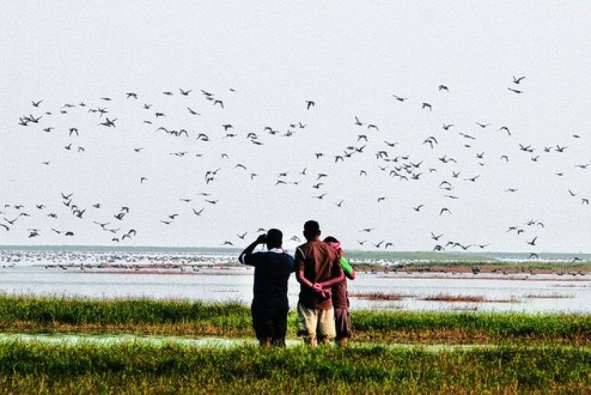 70K birds spotted in 2nd count at Wadhwana lake