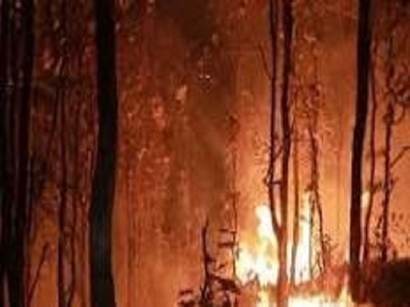 On World Wildlife Day, Asia's 2nd Largest Biosphere In Odisha Is In Flames!