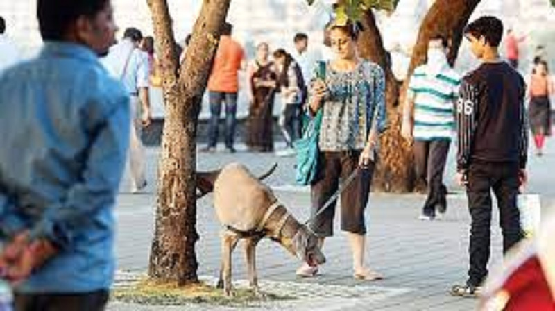 Jaipur residents show cold shoulder to pet registration