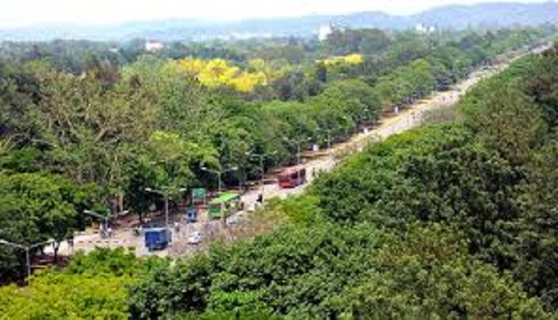 Green warriors in Chandigarh asks to protect trees