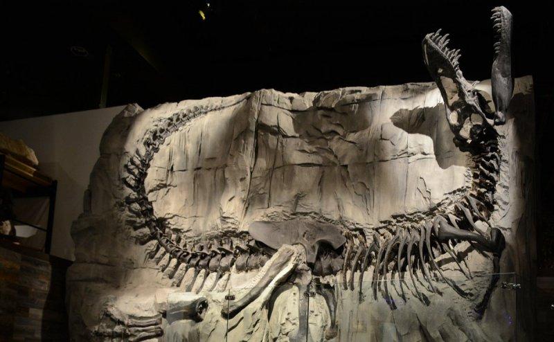 100-Million-year-old fossil bones of Sauropod dinosaurs found in Meghalaya