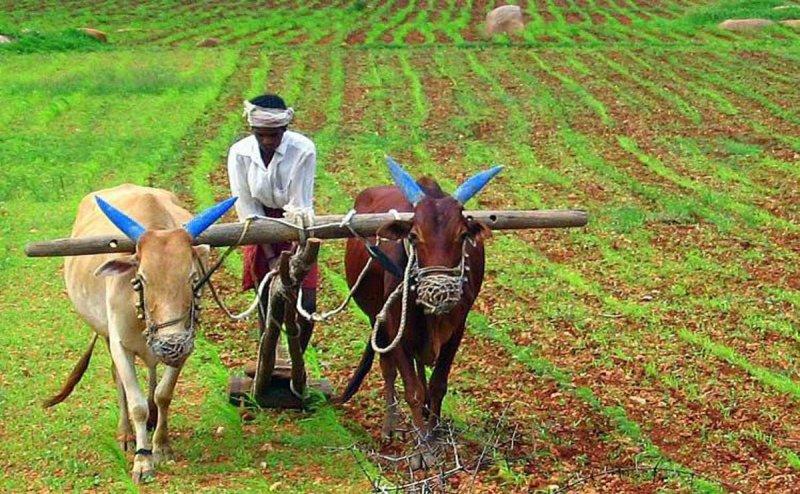 Landless farmers to get Rs 6k/yr : Chhattisgarh CM