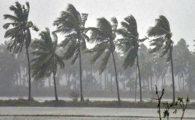 Heavy Rainstorm in Thane, Trees fell apart on Roads