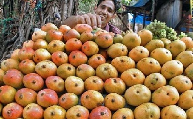 Alphonso mangoes to cost more this year