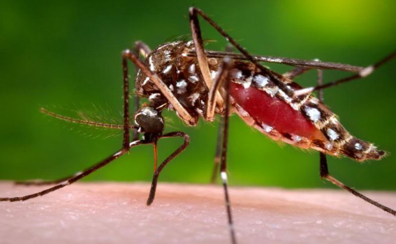 ALERT: Dengue With Corona, Infects 1590 Families in Jamshedpur