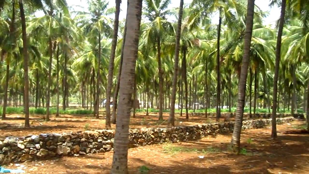 Forest department under Salem circle to distribute over nine lac sapling to farmers